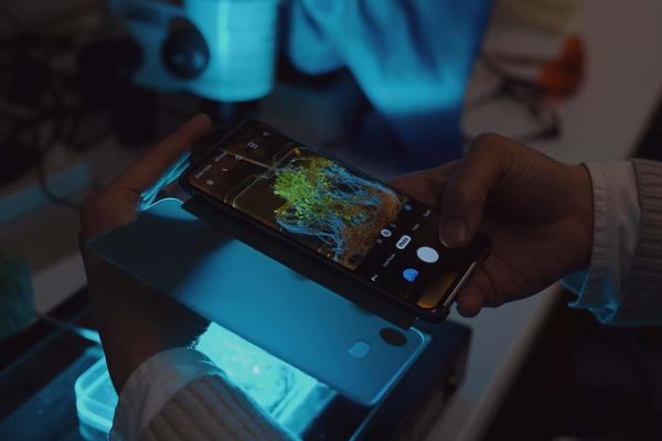 This research can be transferred to many laboratories using low cost equipment that is widely available. Roots can be assessed using a smart phone with a blue-light transilluminator and an orange filter (c. Gem Toes-Crichton).jpg