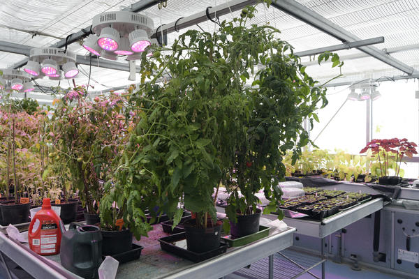 Greenhouses in Plant Sciences