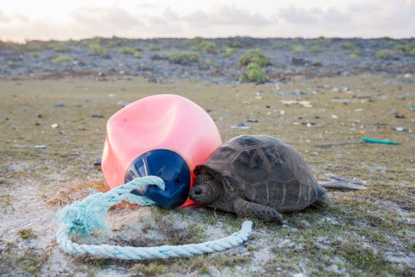 Aldabra clean up (credit: Seychelles Islands Foundation)