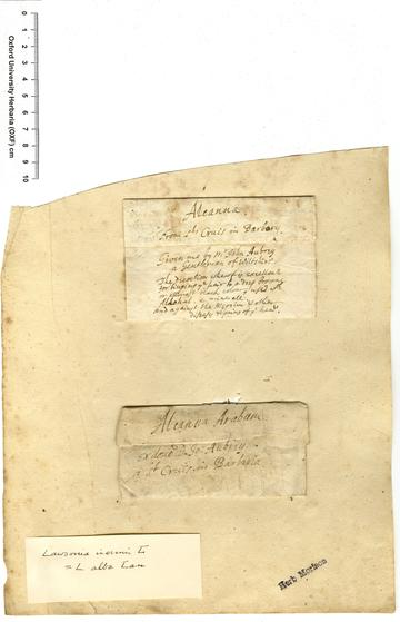 Previous unknown paper which Aubrey gave to Bobart, containing a henna sample