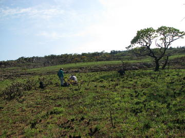 The beginnings of regeneration after an extensive cerrado fire in 2007/8. This area is very rich in plant species and had fully recovered a few months later