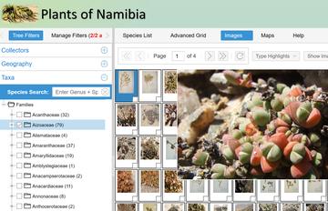 namibia website