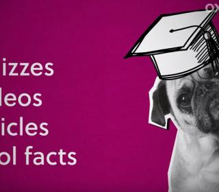 Quizzes etc. with an Oxplore logo, and a pug dog with a mortarboard hat