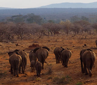elephantsbees listing